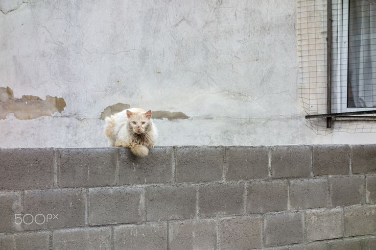 Cat time - Cat on wall