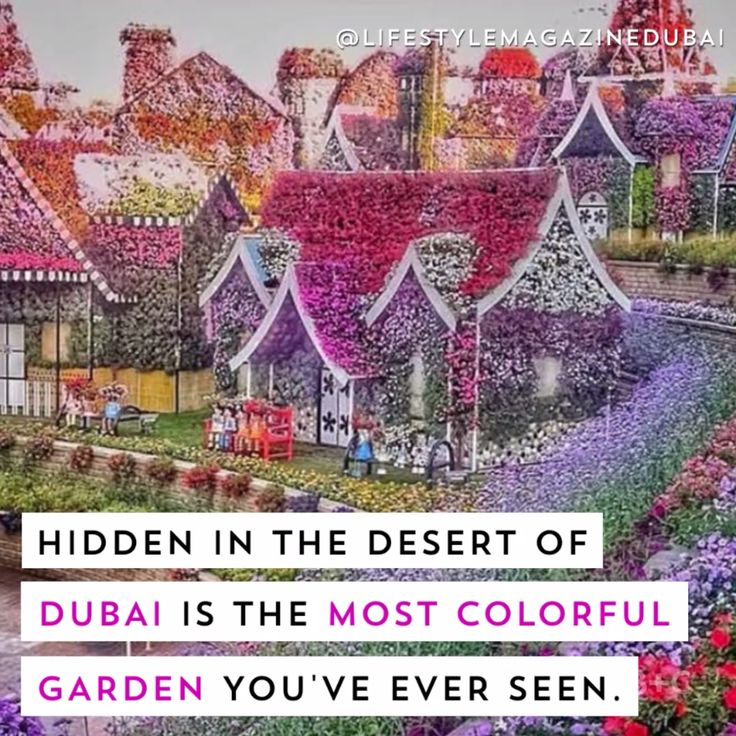 Hidden in the dessert of Dubai is the most colorful garden. Watch this video to learn more about the multicolored Miracle Garden.