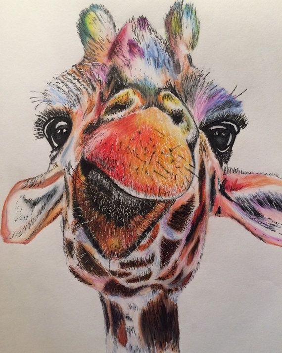 Colored Pencil Giraffe Drawing print by ArtworkByKaitlin on Etsy