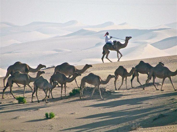 Emirats Arabes Unis Le Quart Vide - On the Edge of the Empty Quarter Photo by Andy Anderson — National Geographic Your Shot - Le Rub al Khali (en arabe: الربع الخالي), littéralement le « Quart Vide », est l'un des plus grands déserts et la plus grande étendue ininterrompue de sable au monde. Il occupe environ 650 000 kilomètres carrés dans le tiers le plus méridional de la péninsule Arabique.