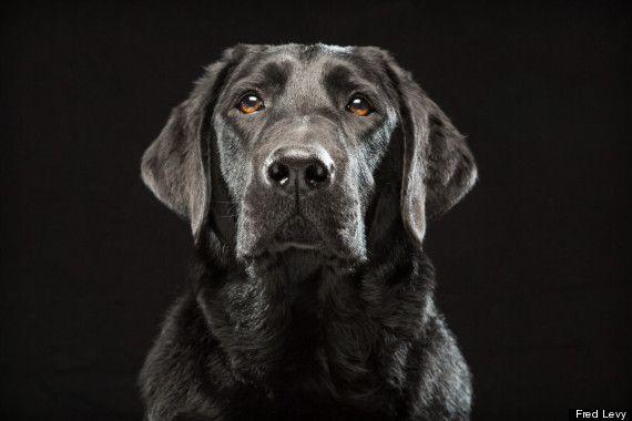 Nero su nero: scatti d'autore contro i pregiudizi sui cani neri.