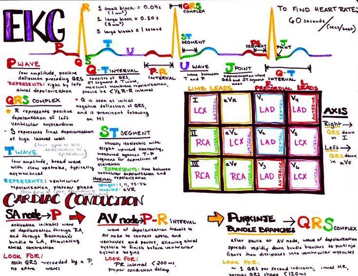 EKG/ECG Basics | NURSING 101 | Icu nursing, Cardiac nursing