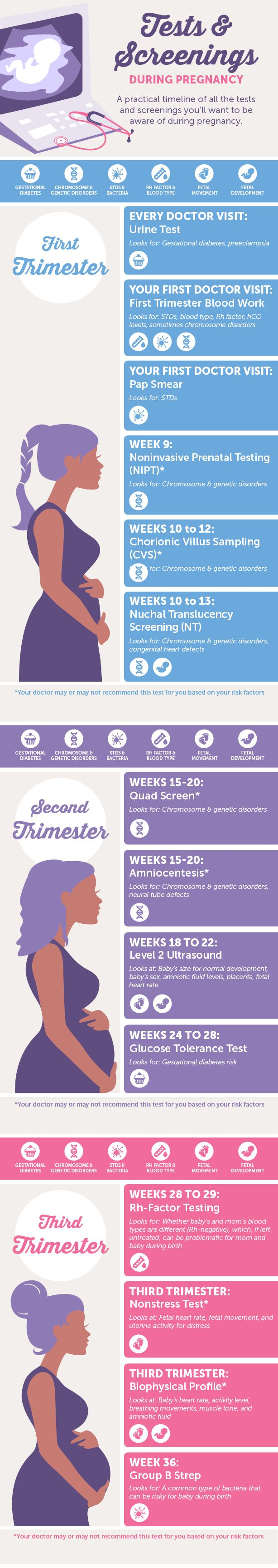 A Guide to Tests & Screenings During Pregnancy