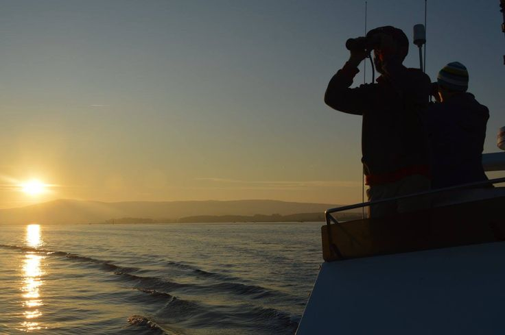 Scouting for dolphins and whales in the sea off the coast of Galicia, Spain.