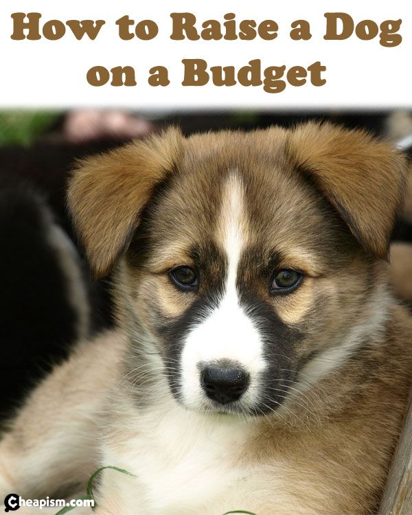 Raise a pup - not the bills. Use these tips to save money so you won't have to worry about keeping the newest family member safe and happy.