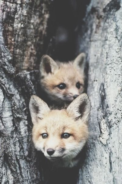 & as they inhaled the crisp morning air, they opened their imploring eyes and beheld the world around them ..-*-..