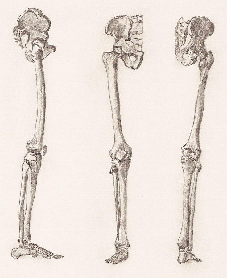 24 Best Bones Images On Pinterest Human Anatomy Bones And Human