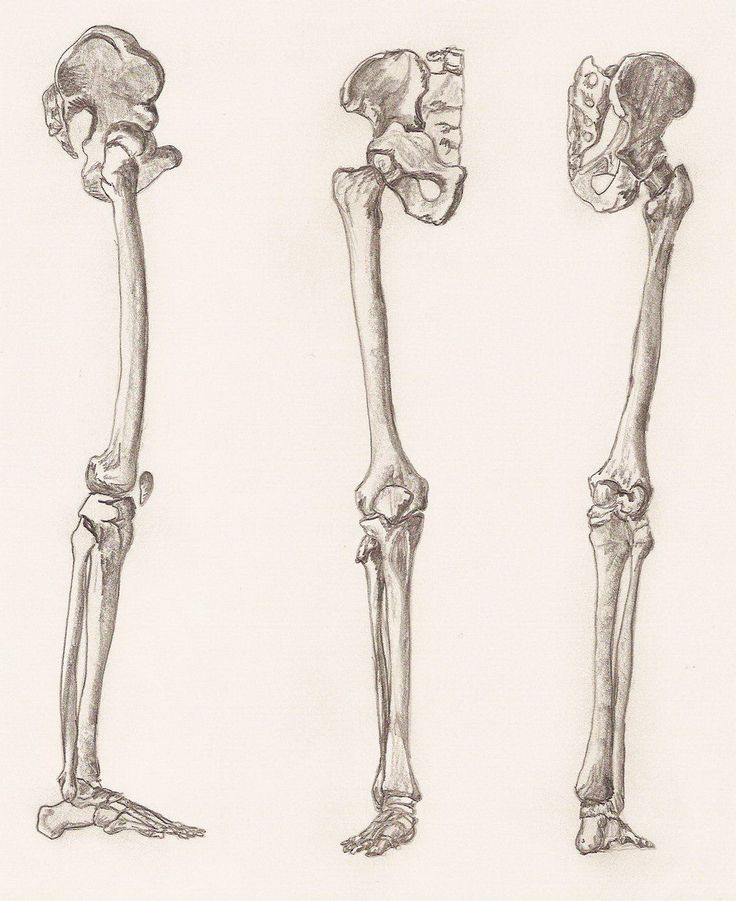 24 best images about bones on pinterest antiques