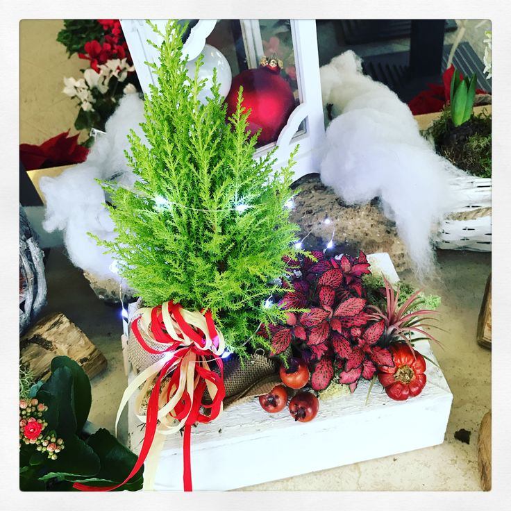 Composizione di piante per Natale con Led www.fioreriasarmeola.altervista.org