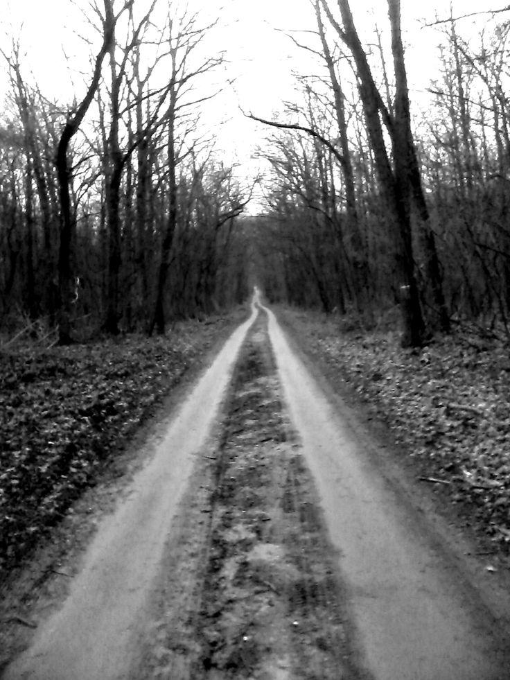 infinity, black 'n' white, trees, way
