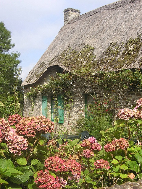 Irish cottage with vintage hydrangeas