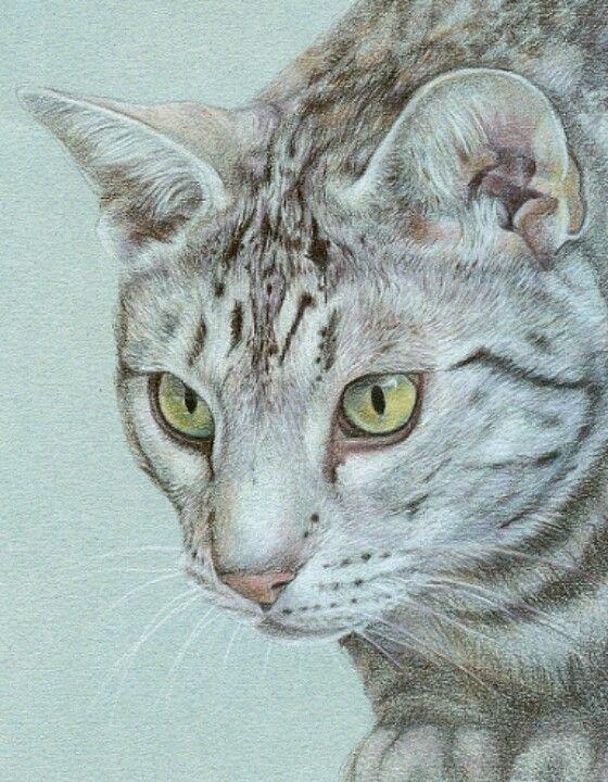 Ocicat Drawing using colored pencils by Artist, Katrina Ann...