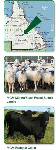 Mitchell Grass Meats : Great lamb & beef packs to order online
