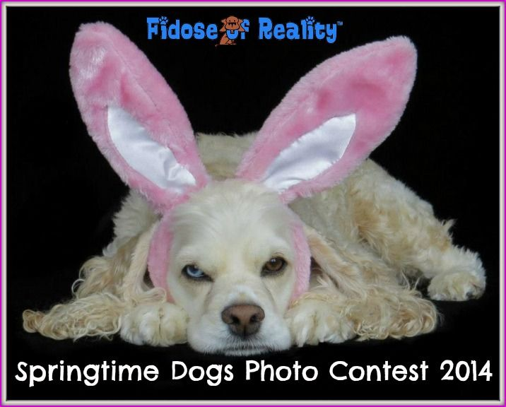 Springtime Dogs Photo Contest for Prizes - Fidose of Reality