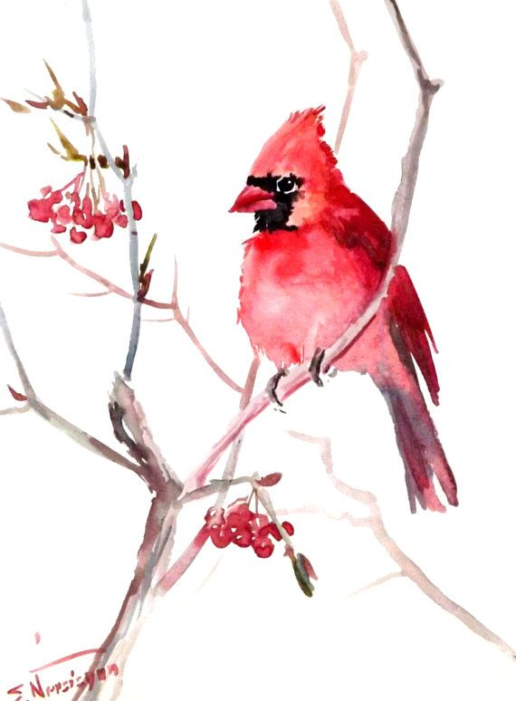 Red Caridnal bird original watercolor painting by ORIGINALONLY, $26.00