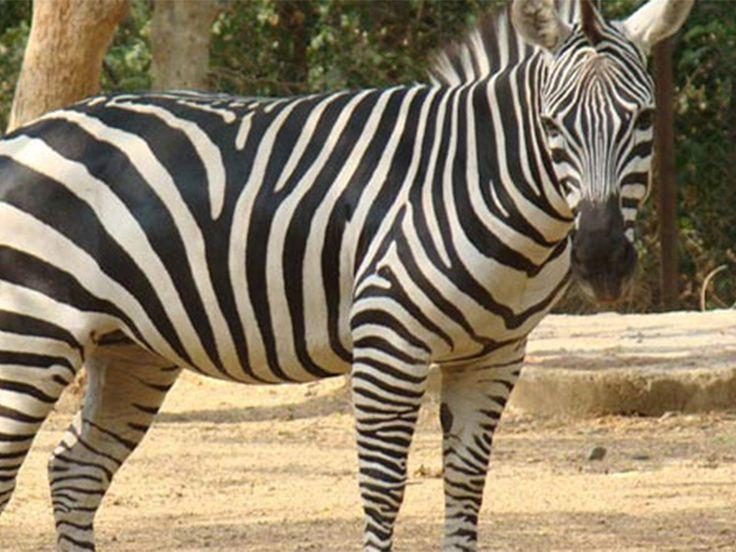 Nandankanan Zoological Park - in Odisha, India