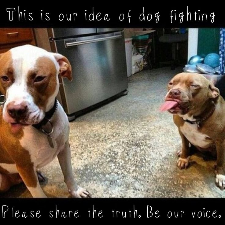 You can be our voice by telling people we think Dog Fighting Is the Pits! Find the shirt here: http://www.myvoicetshirts.com/collections/womens/products/dog-fighting-it-s-the-pits-women-s-short-sleeve-tee