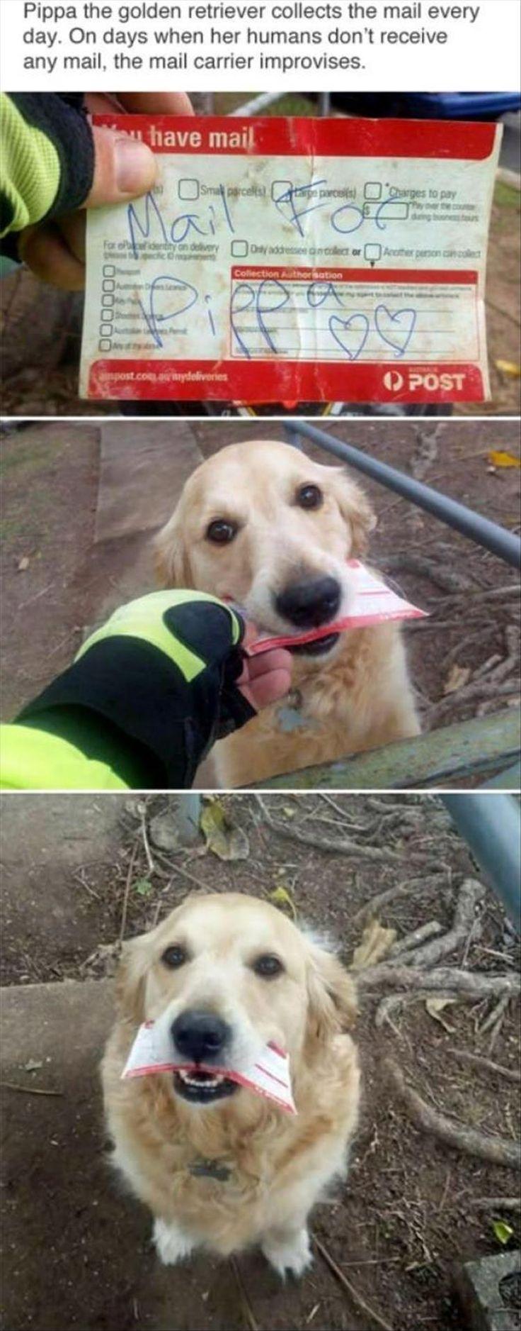 best 25 animal pics ideas on pinterest funny animal pics funny