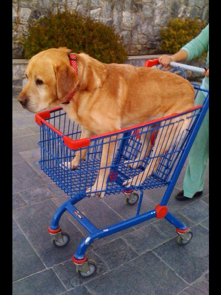Shopping ?