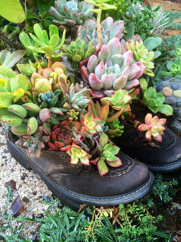 My succulent garden boots! By Designer Laura Eubanks at Design for Serenity.