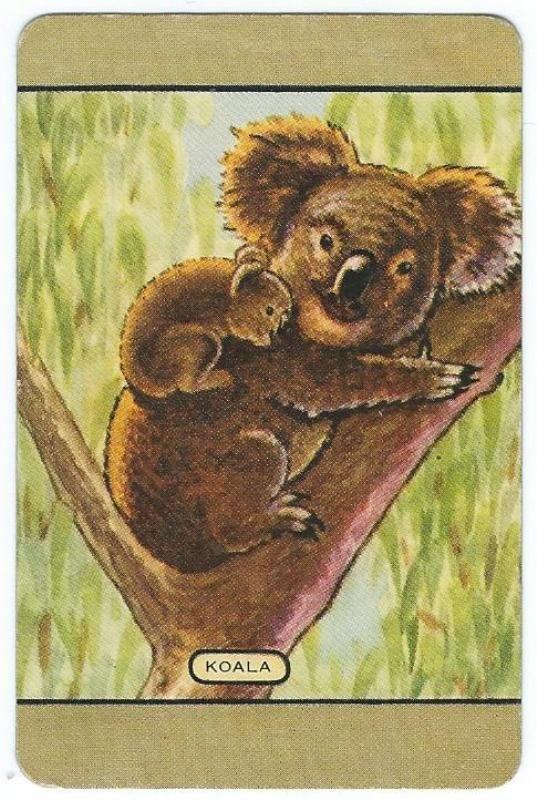 ~~COLES SWAP CARD~~ NAMED ~ KOALA.