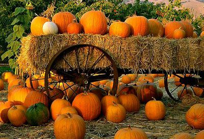 Coupons for Admission to Pumpkin Patches & Corn Mazes