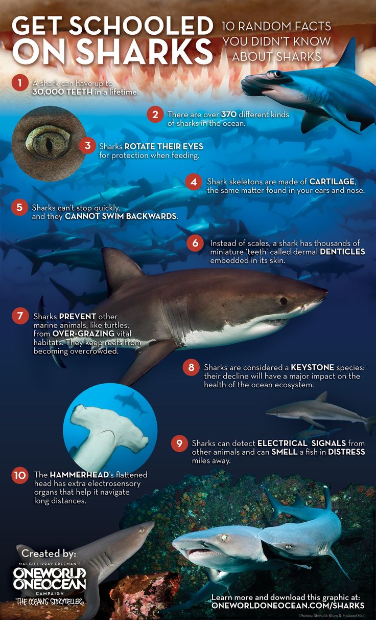 10 Random Facts You Didn't Know About Sharks