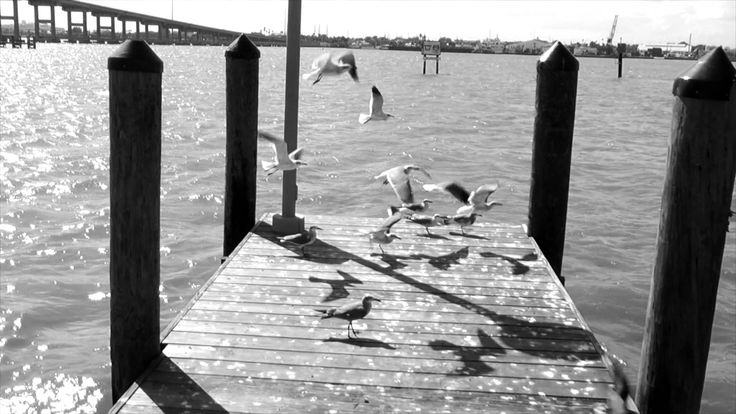 Creative commmons seagull footage