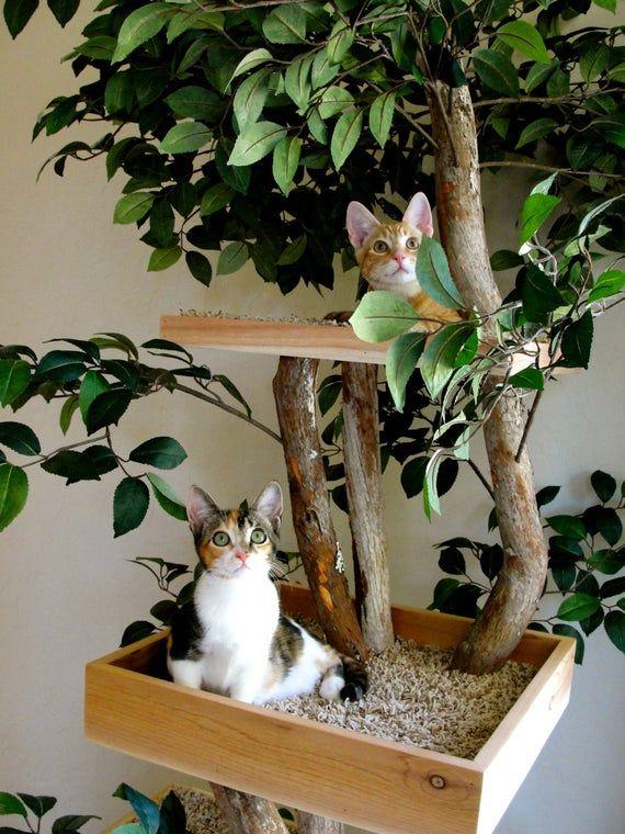 Sycamore Cat Pet Tree House Etsy Cat Tree Cat Towers Cat Room