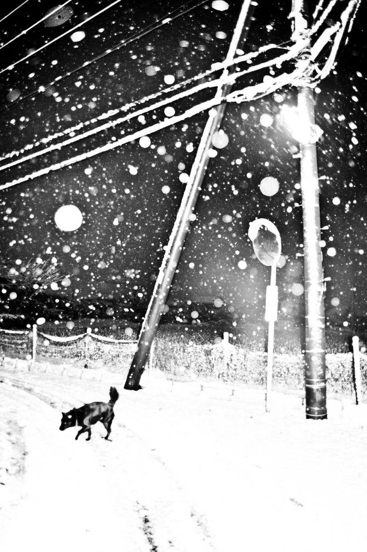Man and dog - Hajime Kimura