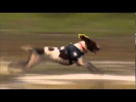 Springer documentary says it all. And this is why I love Springers!