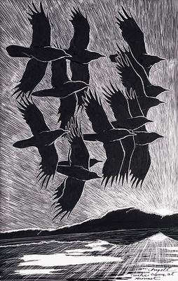 flying crows..Tony Angell illustrator