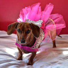 Image result for princess dachshund costume