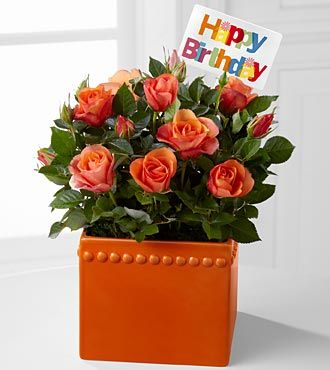 top roses flowers happy - photo #39