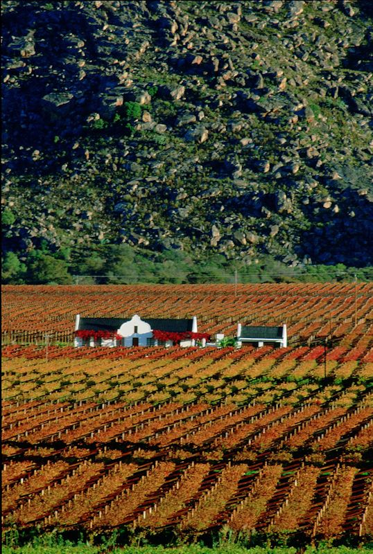 South Africa - wine country