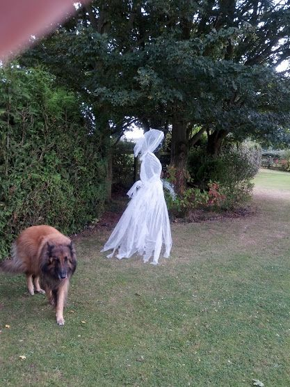 Halloween chicken wire ghost dressed in cheesecloth- view 4---My dog would be so freaked out!!