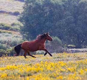 Passeios a cavalo - Gerês