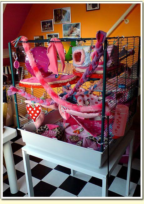 Rat Cage Set Ups Full Room