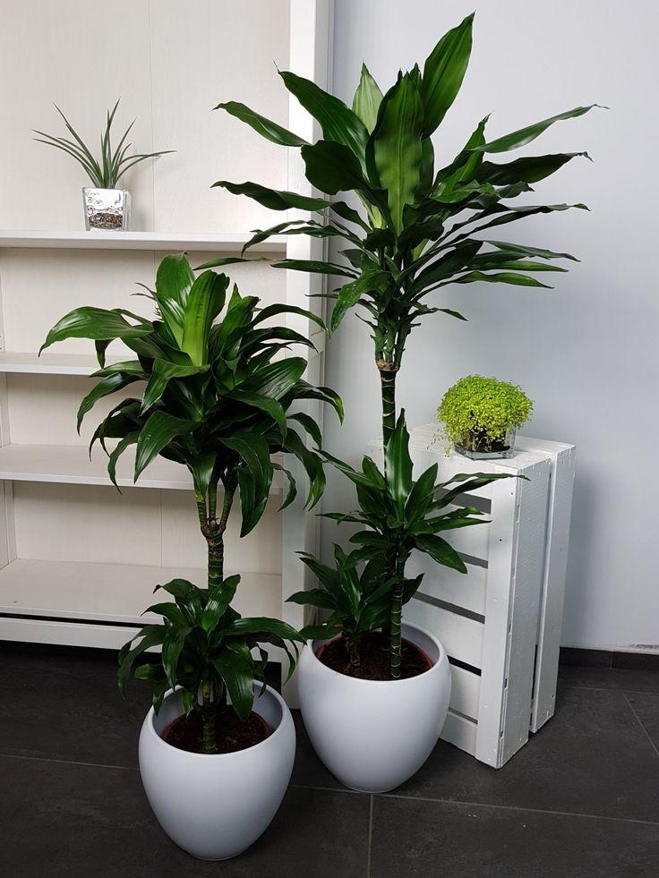 большие офисные растения фото и названия рынок по-прежнему