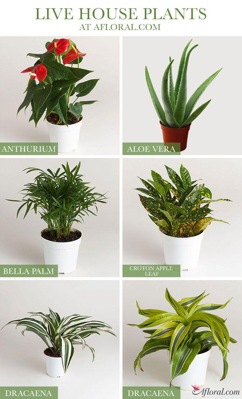 Find Live Indoor House Plants At Afl