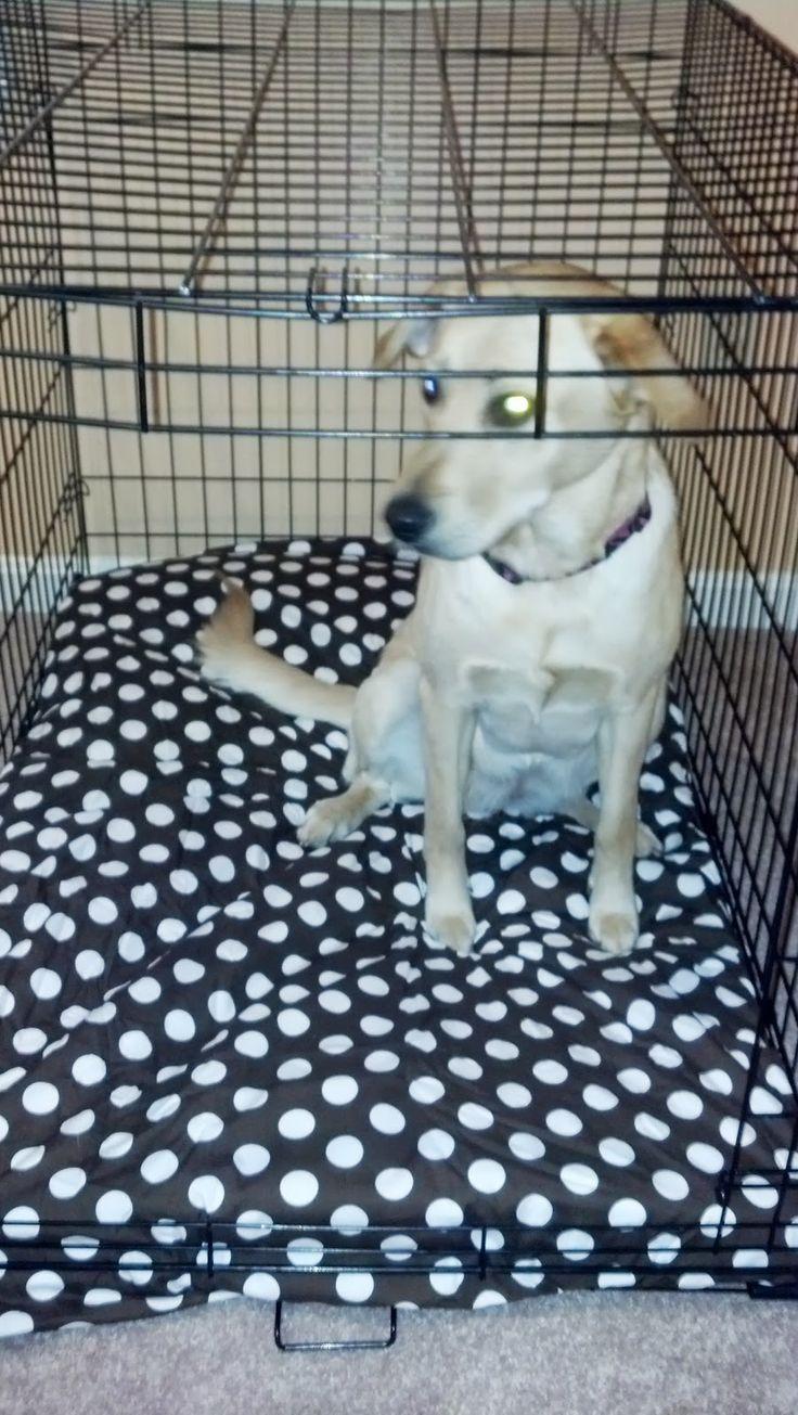 Homemade (cheaper, waterproof) Dog Bed