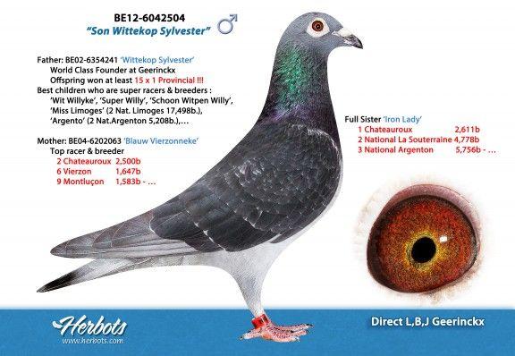 BE12-6042504 • L, B, J GEERINCKX