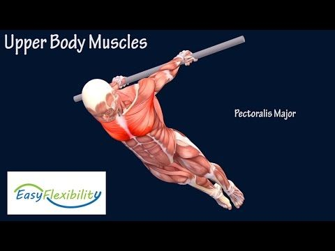 How to Back Lever Gymnastics Muscle Animation Planche EasyFlexibility