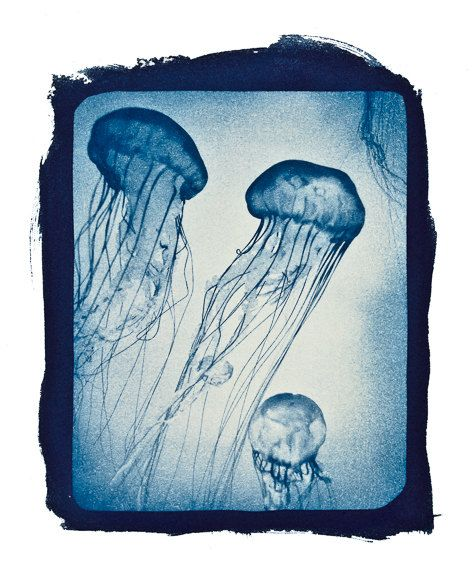 Jellyfish print from original cyanotype by FallRiverEditions, $15.00