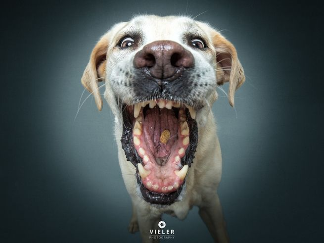 Hilarious High Speed Flash Photos Of Dogs Catching Treats Dogs Dog Photograph Dog Photography
