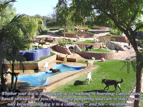 backyard ideas with dogs - 28 images - backyard ideas for ...