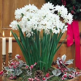 Other Fall-Planted Bulbs For Sale | Buy Flower Bulbs in Bulk & Save