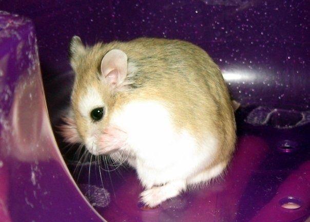 Hamster sex kostenlos