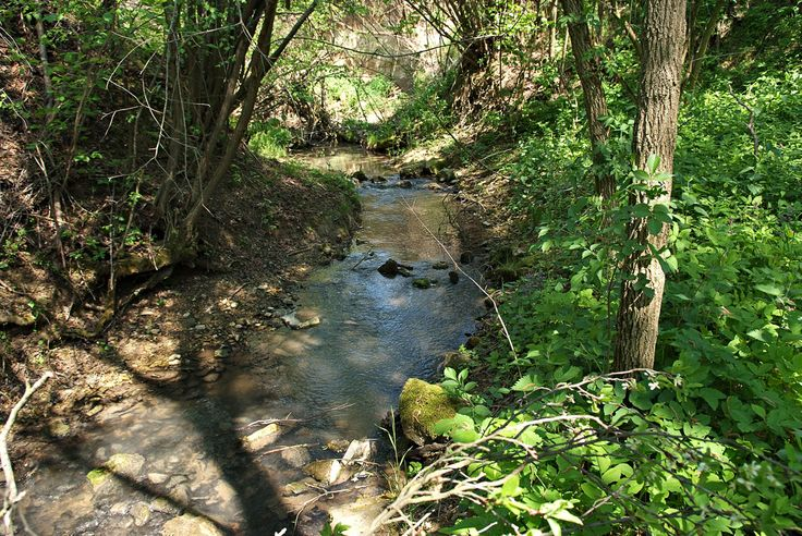 A vadregényes birtokon forrás, patak, vízesés és malomrom...