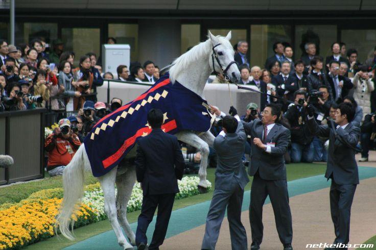オグリキャップの写真一覧。競馬ファンからの投稿写真が掲載されています。ただいま投稿大募集中!ご投稿いただいた競走馬の写真はnetkeiba.comのさまざまなページでも掲載されます。もちろんスマートフォンからの投稿もOK!